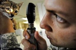 Tierkrankenversicherung-kitten-bekommt-von-arzt-ins-auge-gelaeuchtet